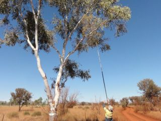 Instrumented Monitoring Program in Coolibah Woodland : Image 4