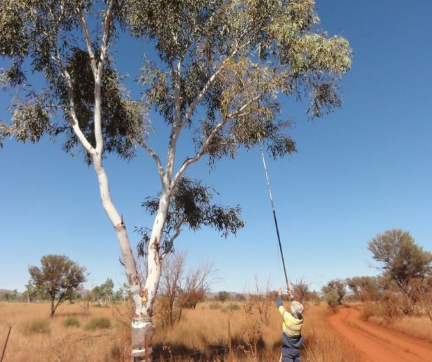 Instrumented Monitoring Program in Coolibah Woodland