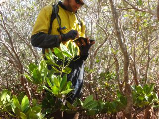 Mangrove Ecological Surveys and Health Monitoring : Image 3
