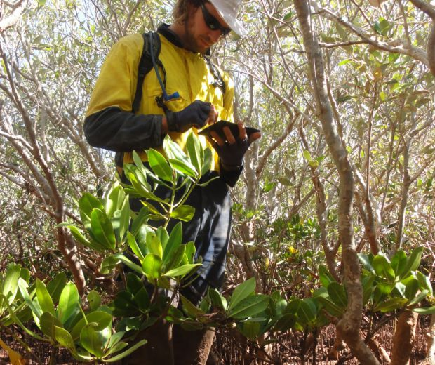Mangrove Ecological Surveys and Health Monitoring