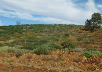 Rehabilitation in the northern Goldfields of Western Australia